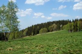 Górskie łąki w okolicy Starego i Nowego Waliszowa
